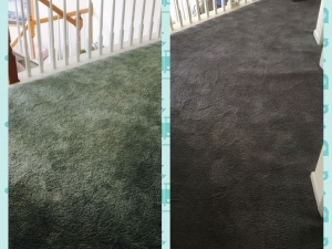 whole-room-carpet_0