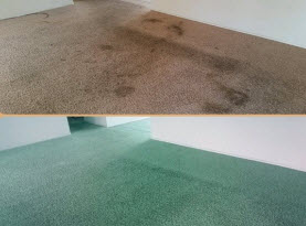 Carpet & Area Rug Dyeing